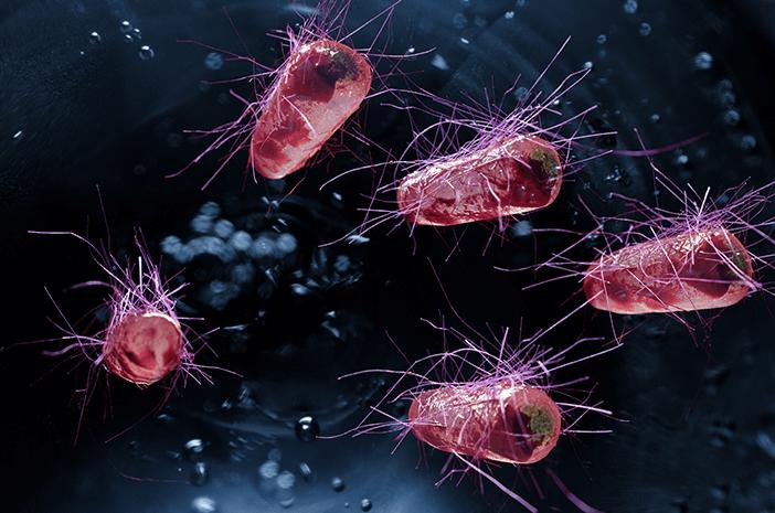 10 Bakteri Terbaik dan Bermanfaat Yang Ada Di Bumi