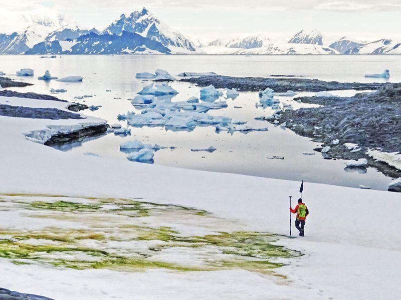Alga Mekar Mengubah Es Antartika Menjadi Hijau