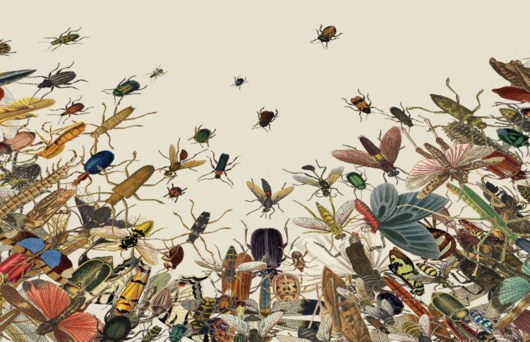 Studi Baru Memberikan Gambaran Tentang Penurunan Serangga